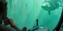 Subnautica Below Zero: Table Coral Location