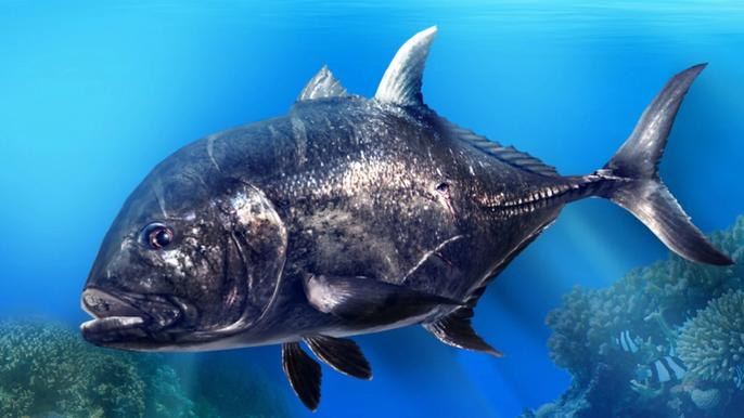 A large black fish from Fishing Clan