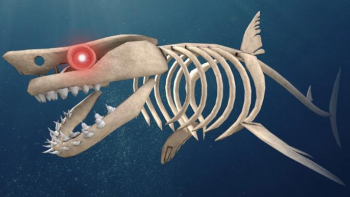 Image of a skeletal shark from SharkBite