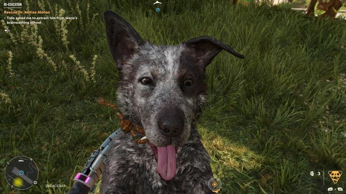 Far Cry 6's Stealth Amigo, Boom Boom, being pet.