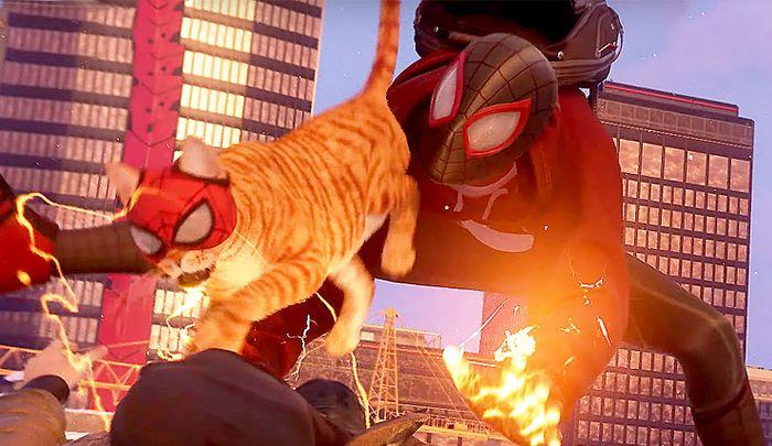 spider man spider cat