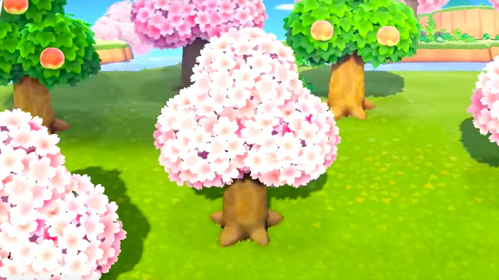 Animal Crossing Cherry Blossoms Event Tree