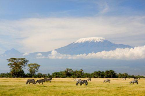zebras kilimanjaro africa flight simulator